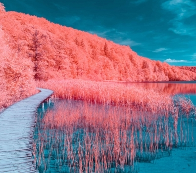 Living Coral: Pantone's Color Of The Year 2019